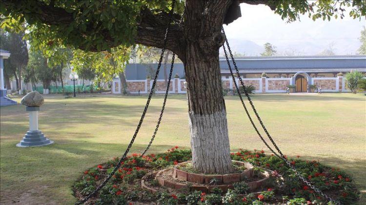 under-arrest-tree-from-120-years-in-pakistan-120 Saalon Se Giraftaar Hai