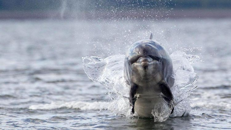 ru/news/sience/282700-potchemu-qibnut-delfini-i-kto-v-etom-vinovat