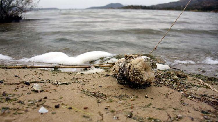 Bafa Gölü kuraklık ve kirlilik tehdidi altında