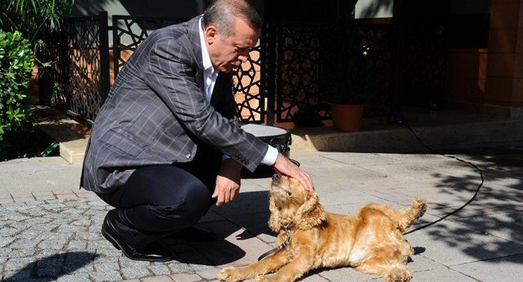 """Erdoğan'dan hayvan hakları talimatı - """"Yasa hala neyi bekliyor, bir an önce çıkartın"""""""
