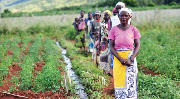 Afrika'nın tarım potansiyeli ve küresel rekabet karşısında Türkiye - Dr. Muhammed Tandoğan