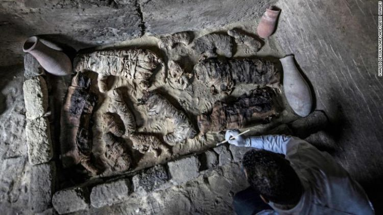 en/news/culture/334916-dozens-of-cat-mummies-rare-beetles-discovered-in-egyptian-tombs