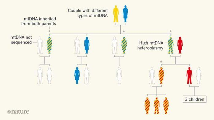 en/news/sience/349836-mitochondrial-dna-can-be-inherited-from-fathers-not-just-mothers