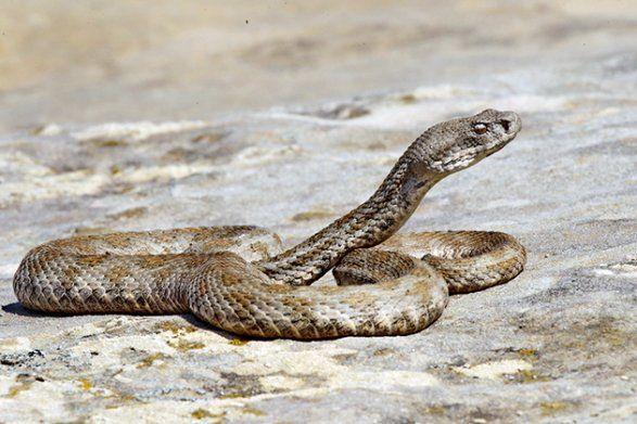 На бакинском бульваре ползают ядовитые змеи? ВИДЕО - ВИДЕО
