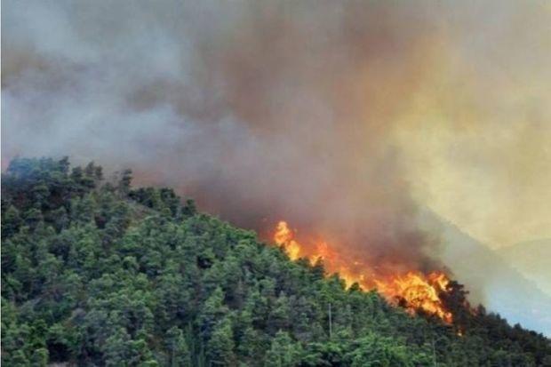Замминистра:Пожар на лесной территории в Ярдымлы локализован - ОБНОВЛЕНО