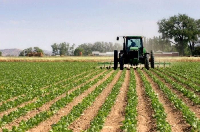 Azerbaijan's flourishing farming sector needs support for smallholders - says UN food expert
