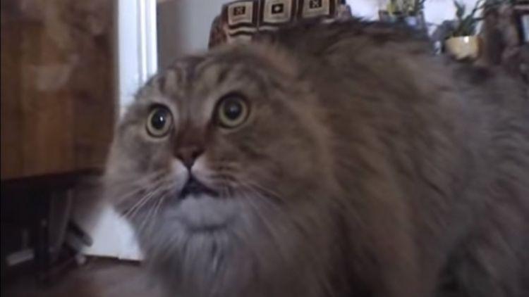 Коты могут говорить, как люди - ВИДЕО