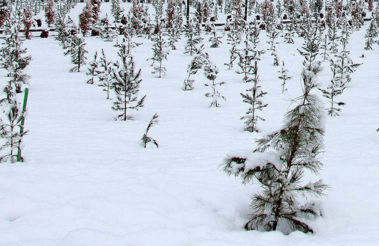 جوانب من المناظر الخلابة الشتوية من شاكي - الصور الفوتوغرافية