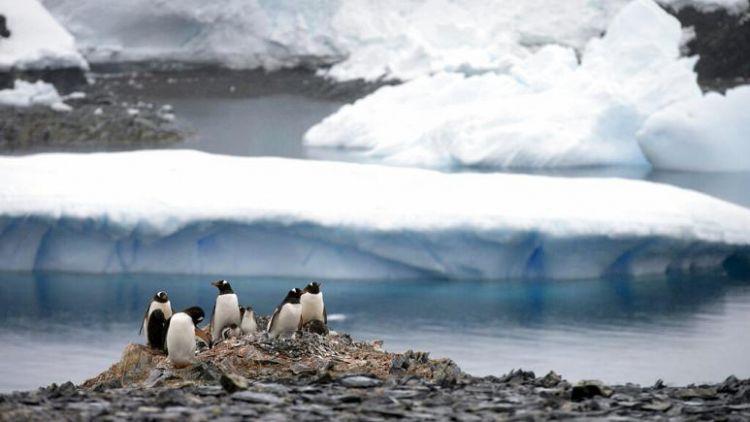 Antarktika'da sıcaklık ilk kez 20 derecenin üzerine çıkarak rekor kırdı