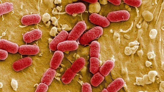 tr/news/sience/417758-yapay-zeka-sayesinde-en-tehlikeli-bakterileri-olduren-antibiyotik-bulundu