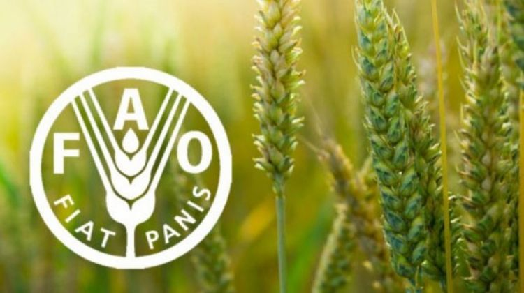 FAO expects new record-high global cereal production and comfortable stock levels for 2020/21, while food assistance needs up