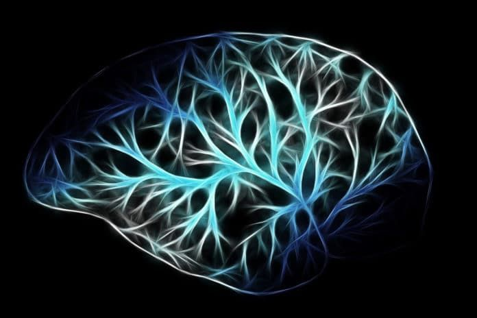 en/news/sience/433950-how-much-oxygen-our-brain-needs