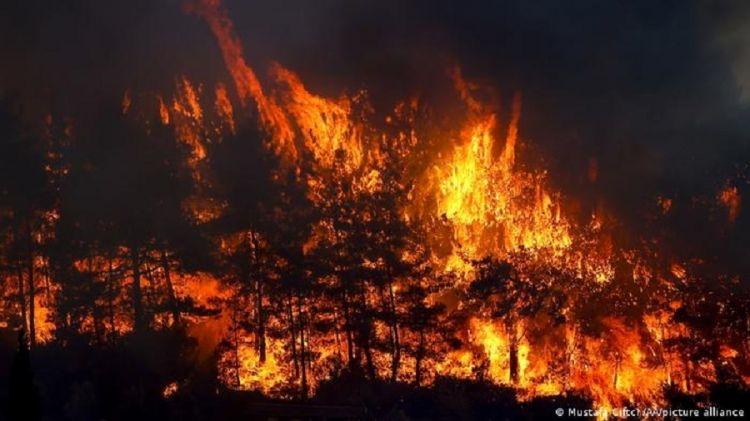 Почему горят леса в Турции? - Эксклюзив Eurasia Diary - ВИДЕО - ФОТО