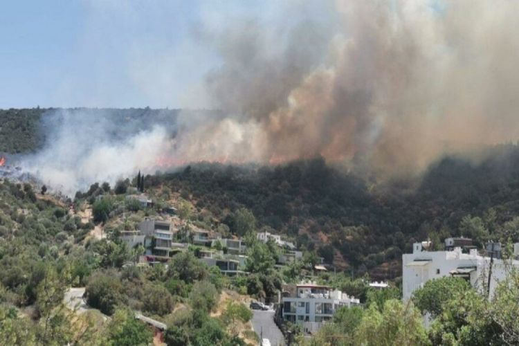 Эрдоган: Задержан подозреваемый в поджоге лесных массивов